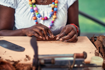 Closeup of woman hands making cigar from tobacco leaves. Traditional manufacture of cigars..Demonstration of production of handmade cigars. Hands rolling dried and cured tobacco leaves.