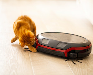 red kitten playing with a robot vacuum cleaner. the photo is made in a light key with partial blur