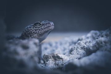 lizard on stone Wall mural