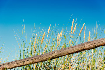 Fototapete - wooden beam and grass on blue sky background