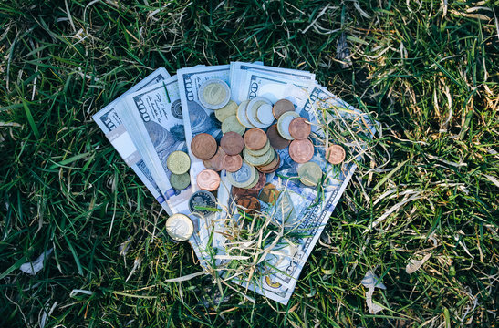 Money lying in the grass. Dollars and coins outdoors.
