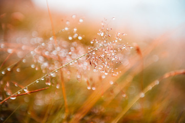 Autumn grass with water drops during the rain. Macro image, shallow depth of field. Beautiful Wall mural