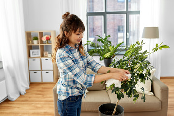 people, housework and care concept - happy asian woman or housewife cleaning houseplant's leaves by...