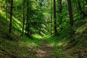 Ein Paradies für Wanderer: Taleinschnitt am 66-Seen-Wanderweg im Landschaftsschutzgebiet Gamengrund