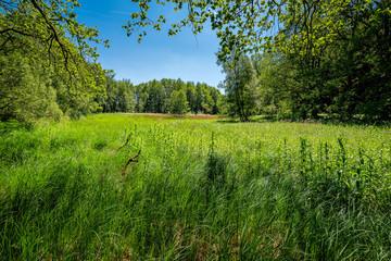 """Feuchtwiese am 66 Seen Wanderweg im FFH-Naturschutzgebiet """"Fängersee und Unterer Gamengrund"""""""