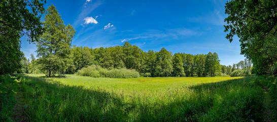 """Feuchtwiese am """"66 Seen Wanderweg"""" im FFH-Naturschutzgebiet """"Fängersee und Unterer Gamengrund"""" – Panorama aus 9 Bildern"""