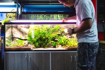 Male worker in aquarium shop feeding fishes.