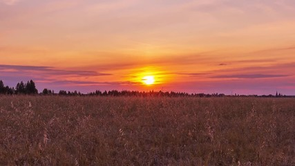 Fototapete - Beautiful scenic sunset with rays of sun shining through clouds in sky Timelapse. Lilac-yellow sunset over the field of wheat. Sun sets over the horizon closeup. Beauty of nature, agriculture, harvest