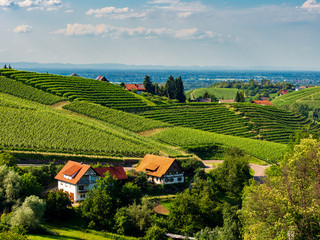 Green hills with summer vineyards in Black Forest