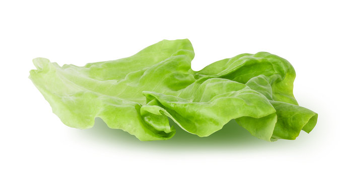 Fresh lettuce leaf isolated on white background with clipping path