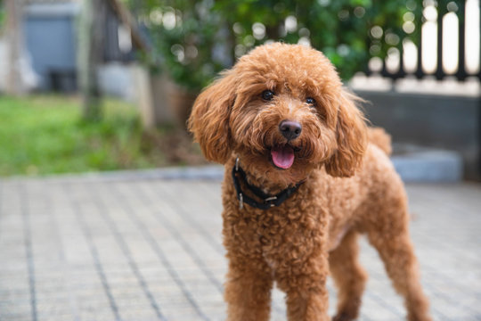 Website banner of a happy dog puppy as home. Healthy purebred dog photographed outdoors in the backyard on a sunny day.