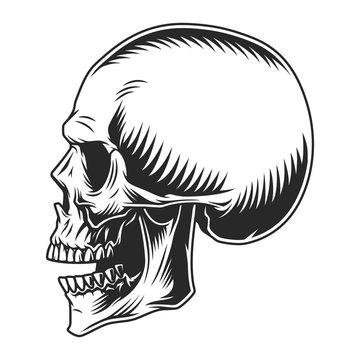 Human skull profile position