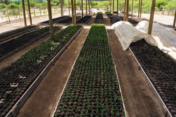 Cultivo de plantas en vivero forestal