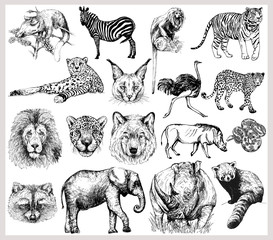 Big set of hand drawn sketch style wild animals isolated on white background. Vector illustration.