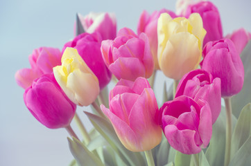 Wall Mural - Mix of tulips flowers