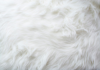 Fur, White Color, Rug, Textured, Fluffy, Backgrounds, Elegance, Softness, Fake Snow, Horizontal, Manufactured Object, Photography