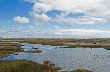 """Laesoe / Denmark: View over a small creek in the coastal flooding area and nature reserve """"Roennerne"""" in the south of the Kattegat island"""
