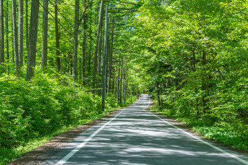 Photo Stands Road in forest 森の道