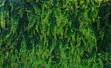 Wall Mural - Green leaves for background
