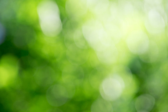 Green bokeh background from nature forest out of focus
