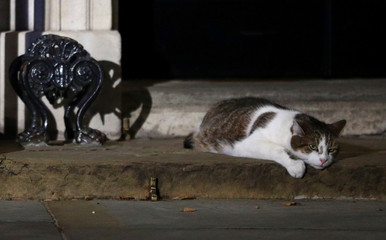 Larry the cat lies outside Downing Street, in London