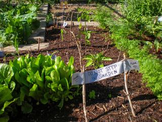 Do Not Step in Garden Sign in Community Garden Plot