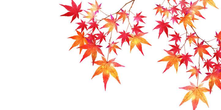 紅葉 もみじ 葉 背景