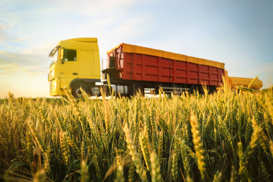 Modern bright truck on road near wheat field
