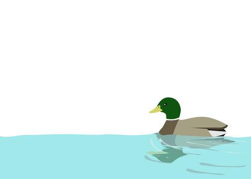水に浮かぶ鴨