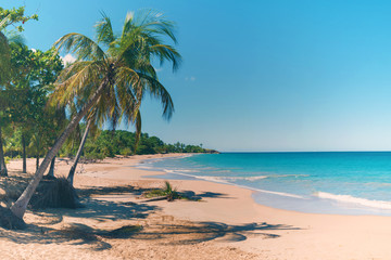 Coconut trees, golden sand, turquoise water and blue sky, wonderful pearl beach , Guadeloupe, French West Indies, panoramic view