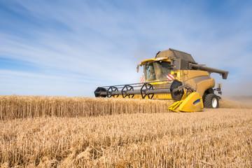 Moisson de blé dans le Vexin français en juillet 2019 /Wheat harvest in Vexin  July 2019 Wall mural