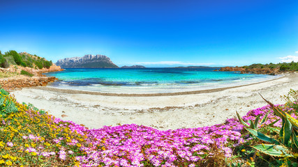 Fantastic azure water with rocks and lots of flowers at Doctors beach (Spiaggia del Dottore) near Porto Istana.
