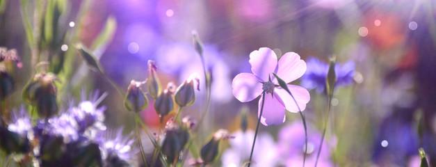 Bloemenweide in de zomer - bloemenweide achtergrondpanorama