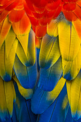 Close-up of parrot feathers, Indonesia