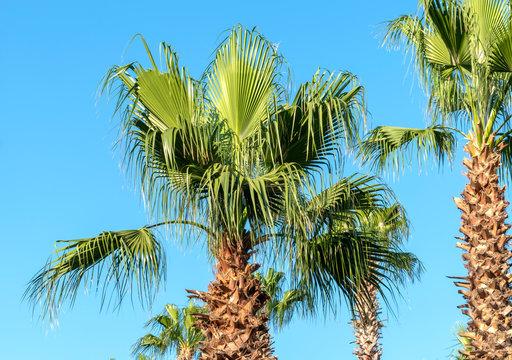 Palms at blue sky background