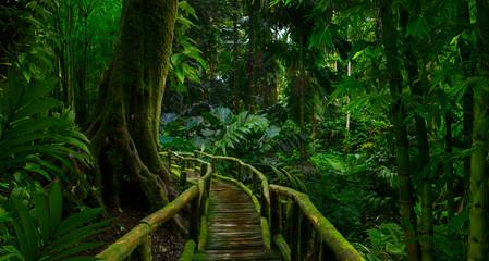 Southeast Asian rainforest with deep jungle Wall mural