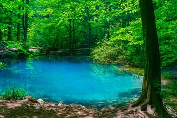 Ochiul Beiului, a small emerald lake on the Nera gorge in Beusnita National Park in Romania