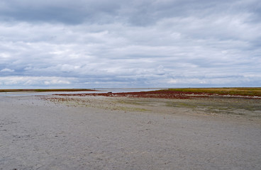 Laesoe / Denmark: Mudflat area with glasswort at the edge to the salt marsh in the south of the Kattegat island at ebb tide