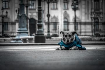 perro en la plaza de lima foto de color selectivo
