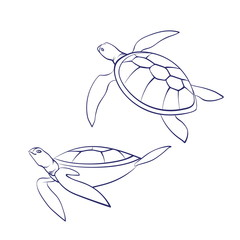 Vector outline cartoon sea turtles. Graphic underwater animal illustration isolated on white background for coloring book