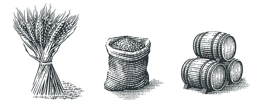 Malt in burlap bag, sheaf of wheat and wood barrels. Hand drawn engraving style