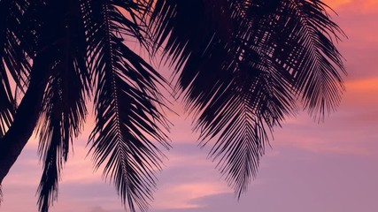 Fototapete - Sunset through coconut palm tree leaf silhouette. Travel destinations. Summer vacations