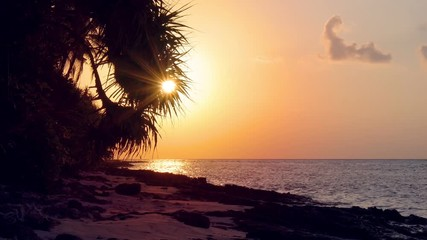 Fototapete - Sunset through coconut palm tree leaf silhouette. Travel destinations. Summer holidays