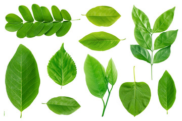set of green leaf isolated on white background Fototapete
