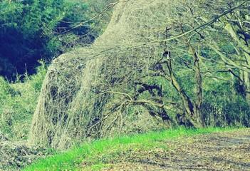 Stores à enrouleur Olive 荒れた枝の木