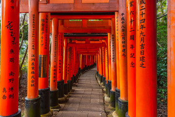 beautiful walkway of Torii gates Fushimi Inari Taisha Shrine in Kyoto, Japan