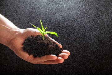 World environment day concept:The mans hand holding a small tree. Two hands holding a light green tree. holding seedlings isolate.Seedlings are growing in the days ahead.- Image