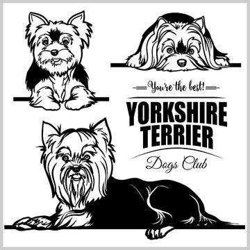 Yorkshire Terrier - vector set isolated illustration on white background