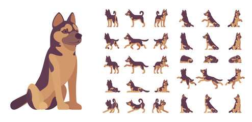 Shepherd dog set. Working breed, family pet, assistance, search service, rescue, police, and military help. Vector flat style cartoon illustration isolated, white background, different views, poses Fotobehang