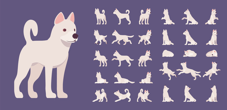 White dog set. Working active breed, cute family home pet, companion for disability assistance, search, rescue, police, military help. Vector flat style cartoon illustration, different views and poses
